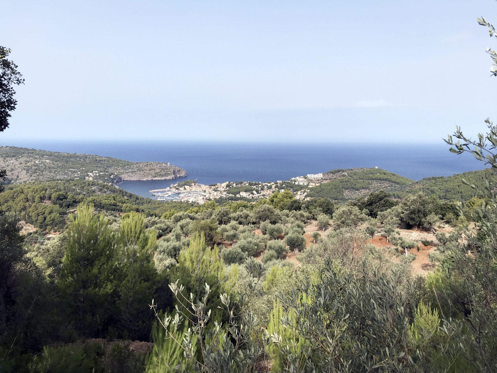 Olivar con impresionantes vistas sobre el Puerto de Soller